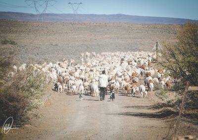 Moordenaars Karoo enduro-188